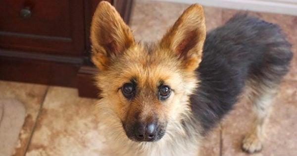 dog mistaken as puppy