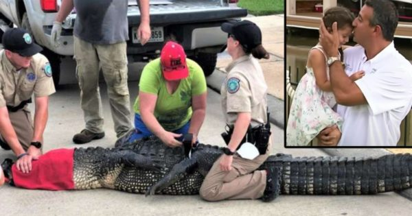 Nearly 12-Foot Alligator In Texas Is Headed Right For 4-Year-Old But Her Brave Dad Isn't Having It