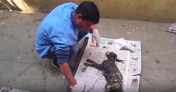rescuers find dog covered in tar