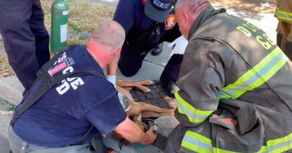 firefighters rescue dog from burning building