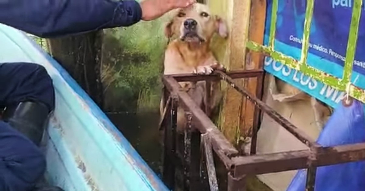 dog rescued from floodwaters