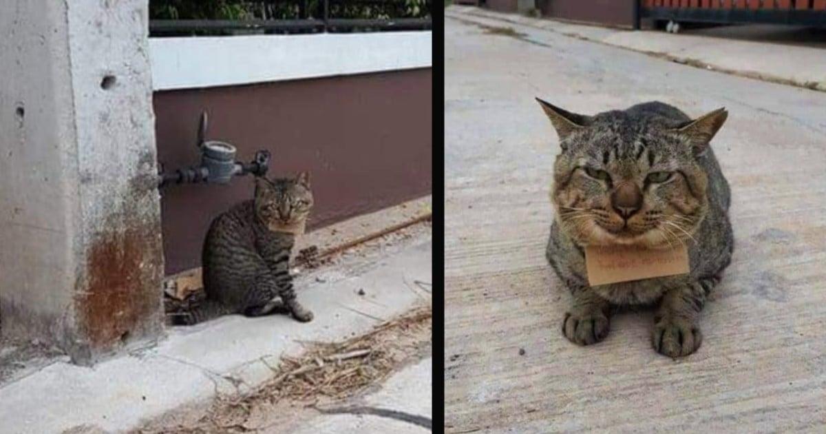 missing cat returns home in debt