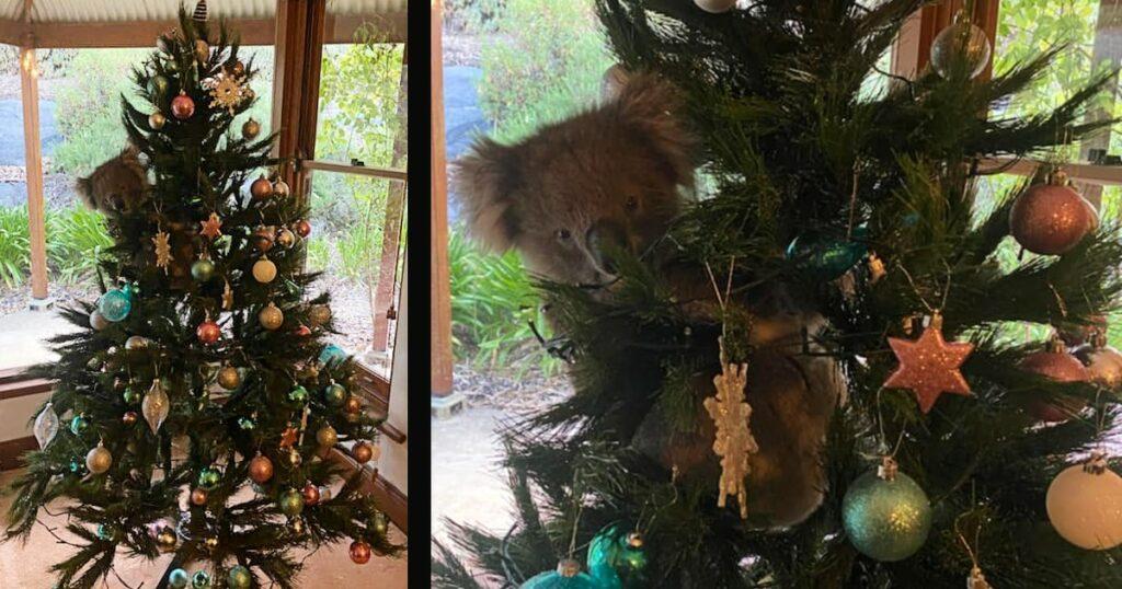 koala in the christmas tree