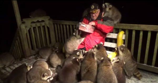 man feeding raccoons