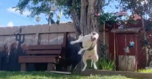 dog playing on backyard swing