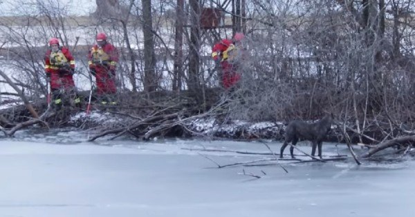 dog stranded on ice