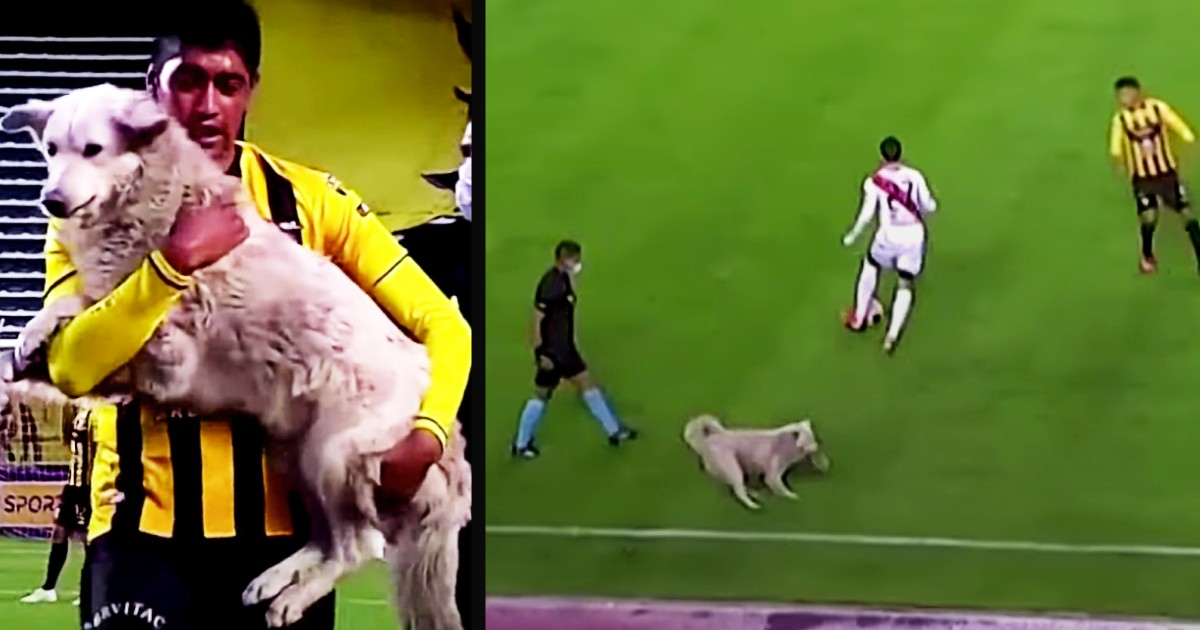 dog interrupts soccer game cachito