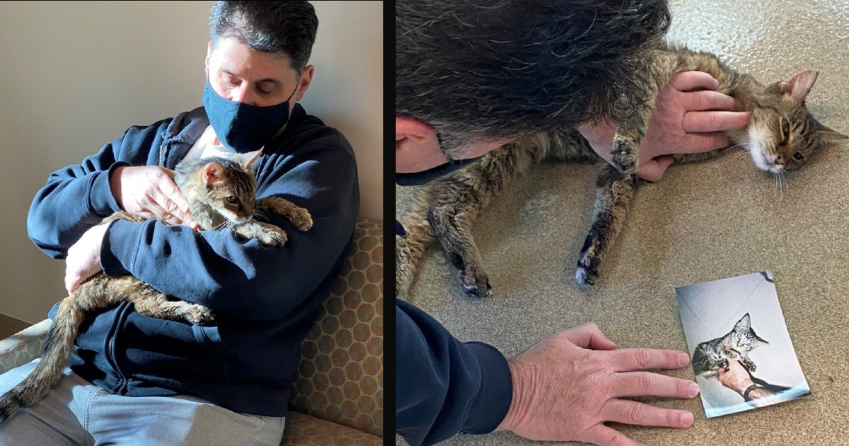 cat went missing reunited 15 years later