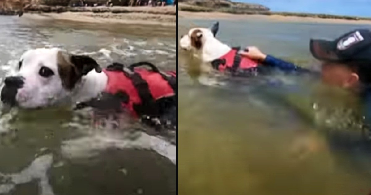 dog saves child from drowning