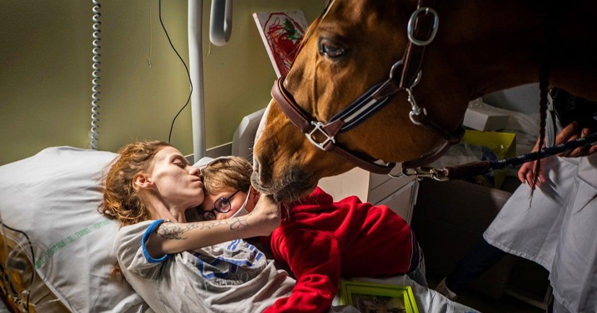 peyo therapy horse