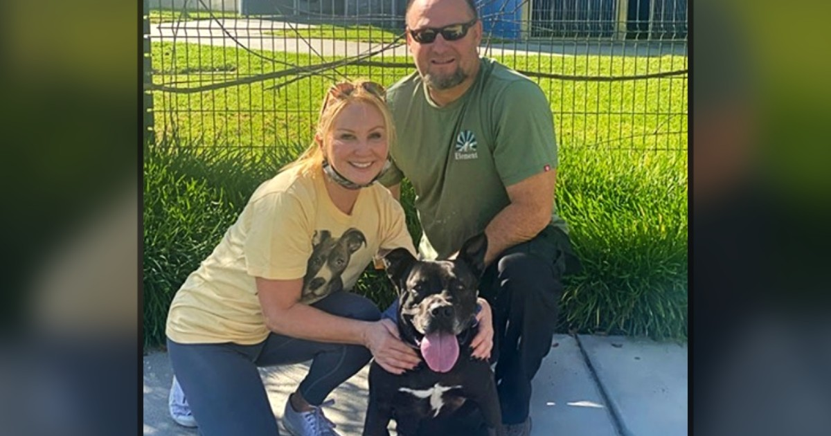 pit bull for adoption melvin finds home