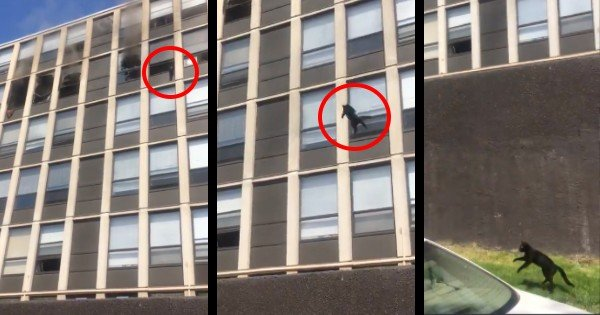 cat jumps out the window 5th floor