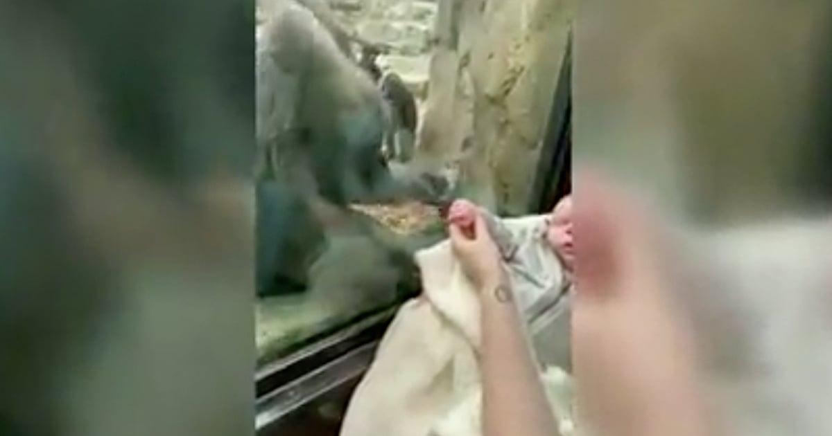 baby and gorilla at zoo