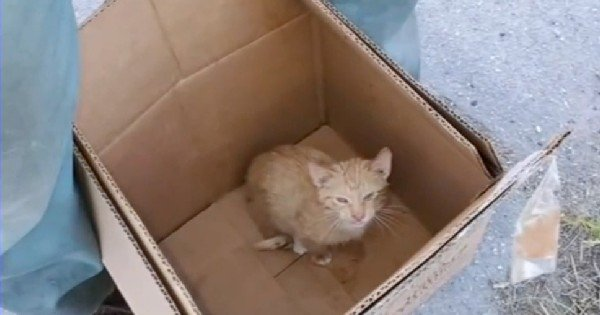sound of kitten meowing stops trash compactor