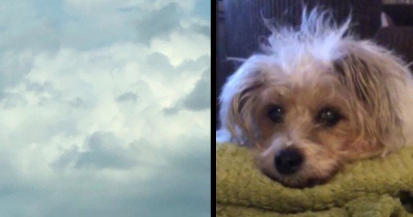 dog in the clouds