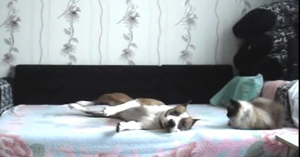 dog not allowed on bed
