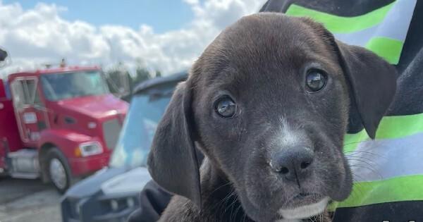 puppies found in gravel pit