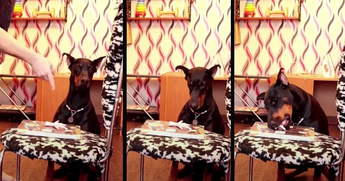dog eats treat then replaces it