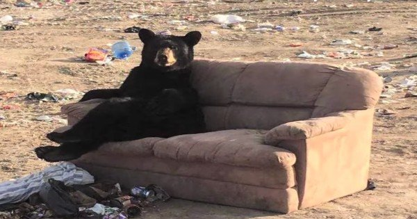 bear sitting on a couch