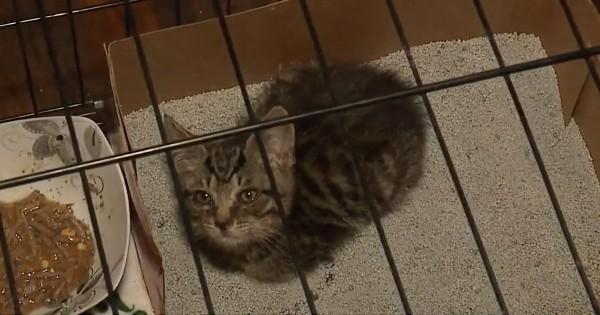 kitten trapped in u haul