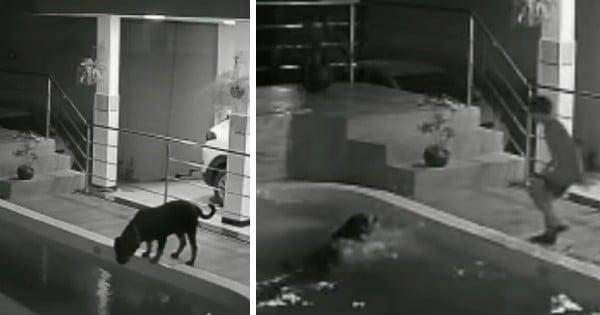 falls into pool