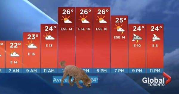 dog interrupts weather storm