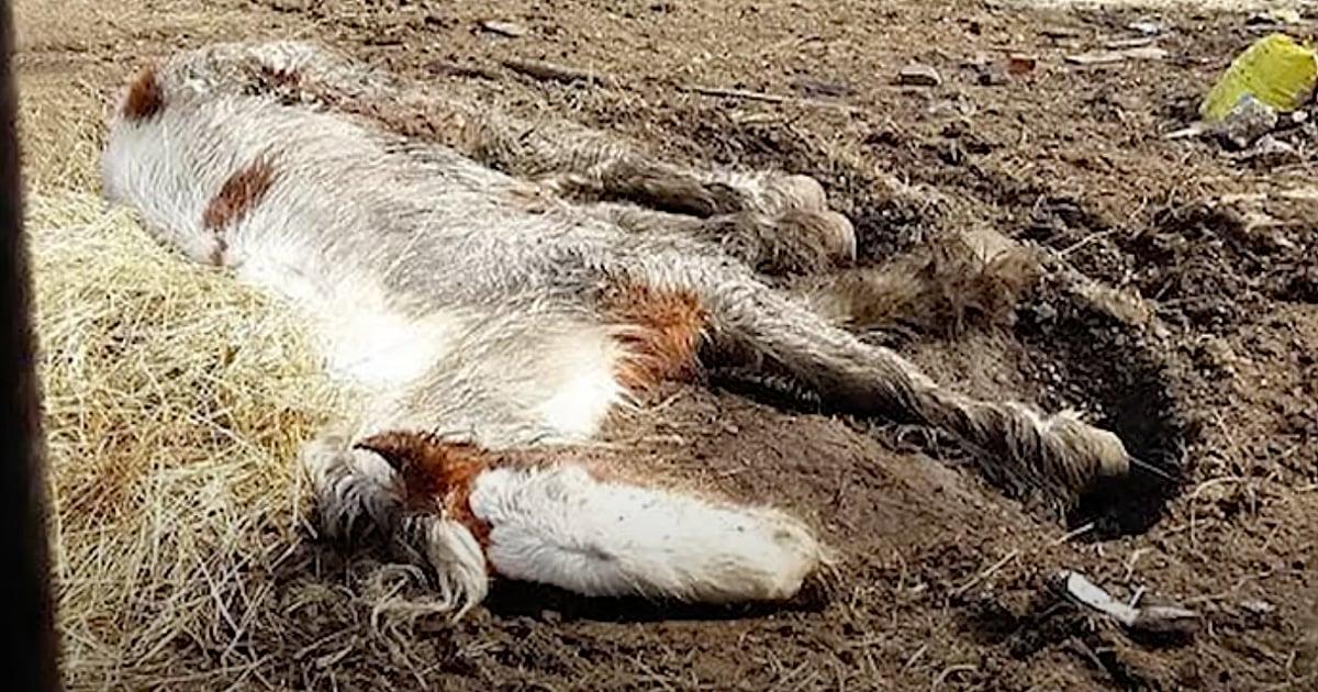 rescue pony heidi transformation