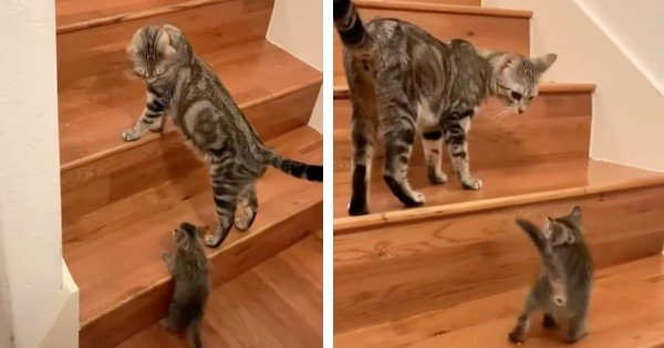 kitten learning how to climb stairs
