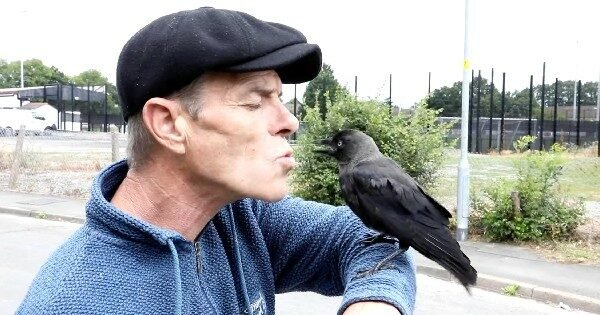 Man Finds A Wild Bird Injured On The Side Of The Road And Now They Share An Unbelievable Bond