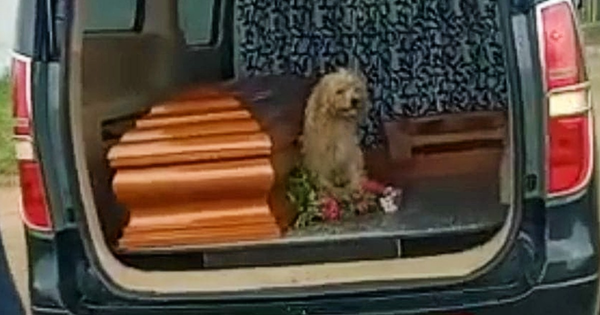 a loyal dog bumer