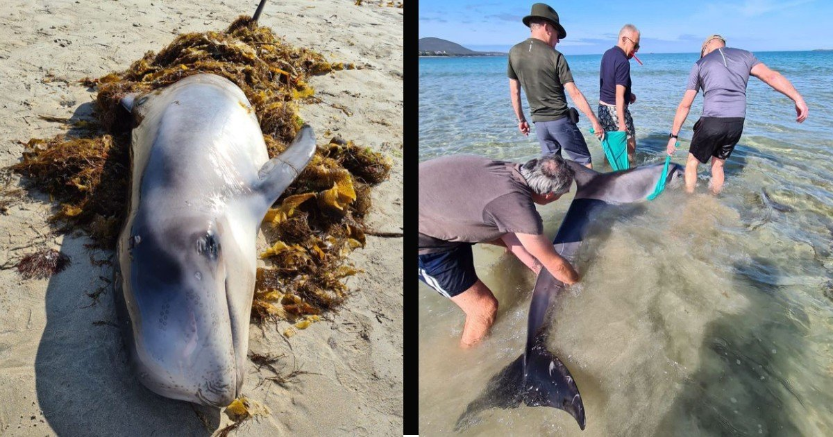 beached dolphin rescue